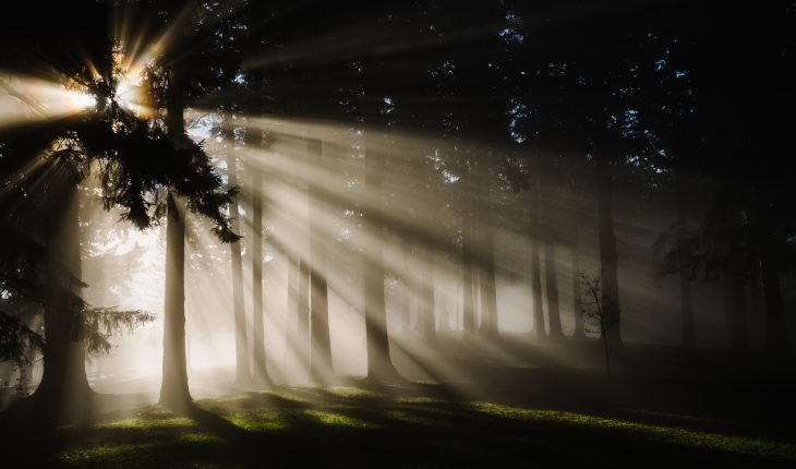 Beautiful light rays shining through fog and trees in a forest during a morning sunrise at a park