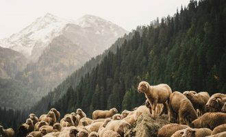 What is a Pastoral Preacher?