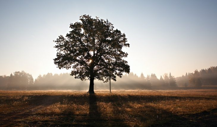The Practical Importance of Limited Atonement