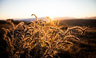 The Unstoppable Unfolding of God's Promises